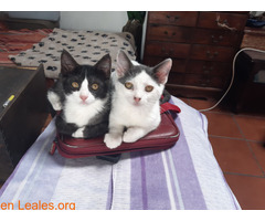 Adopcion responsable y definitiva!!! - Imagen 1