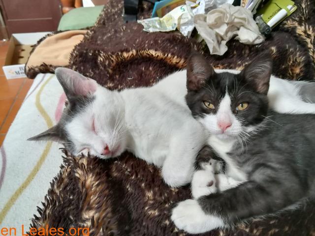 Adopcion responsable y definitiva!!! - 2
