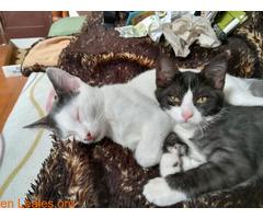 Adopcion responsable y definitiva!!! - Imagen 2