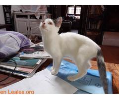 Adopcion responsable y definitiva!!! - Imagen 5