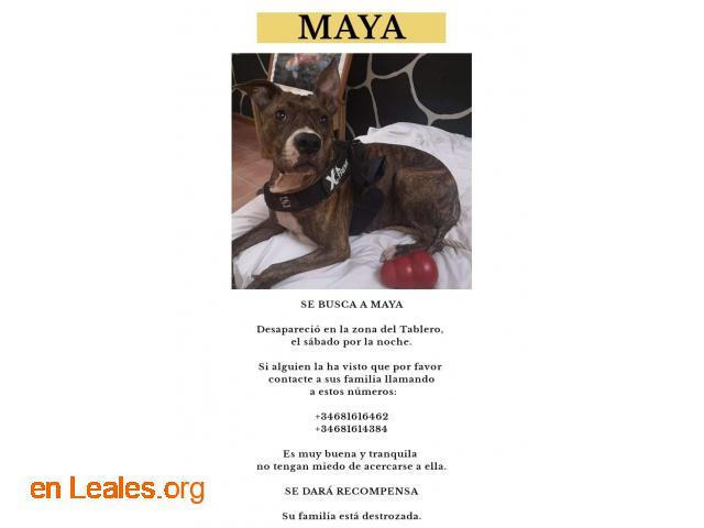 Ya en casa - Maya - 2