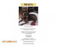 Ya en casa - Maya - Imagen 2