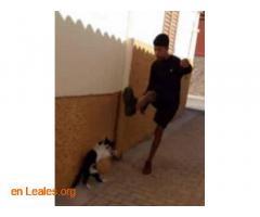 Identificado maltratador en Vecindario - Imagen 1