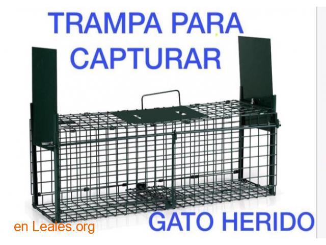 SE PIDE JAULA TRAMPA PARA COGER GATITO. - 3