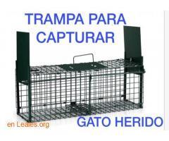 SE PIDE JAULA TRAMPA PARA COGER GATITO. - Imagen 3