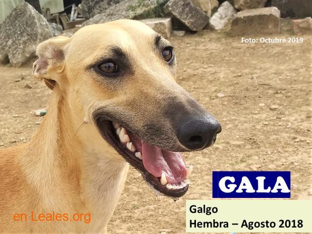 GALA EN ADOPCION - 1