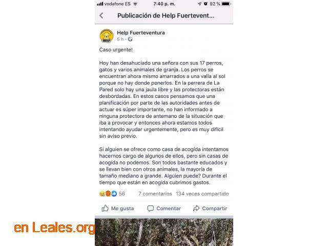 DESAHUCIO* URGE ACOGIDA, PAGAN GASTOS. - 6