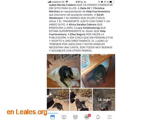 DESAHUCIO* URGE ACOGIDA, PAGAN GASTOS... - 8