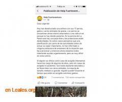 DESAHUCIO! URGE ACOGIDA, PAGAN GASTOS... - Imagen 6