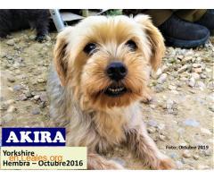 AKIRA  - Imagen 2
