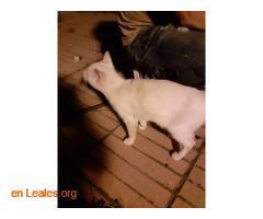 Urge adopción o acogida** - Imagen 6