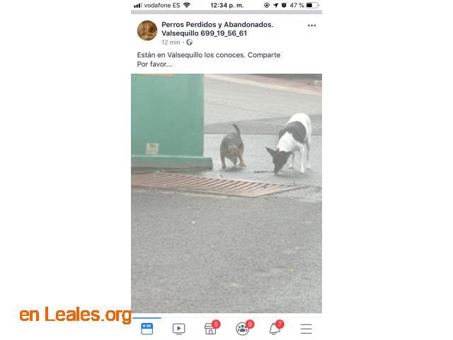 ENCONTRADOS EN VALSEQUILLO* LOS CONOCES? - 2