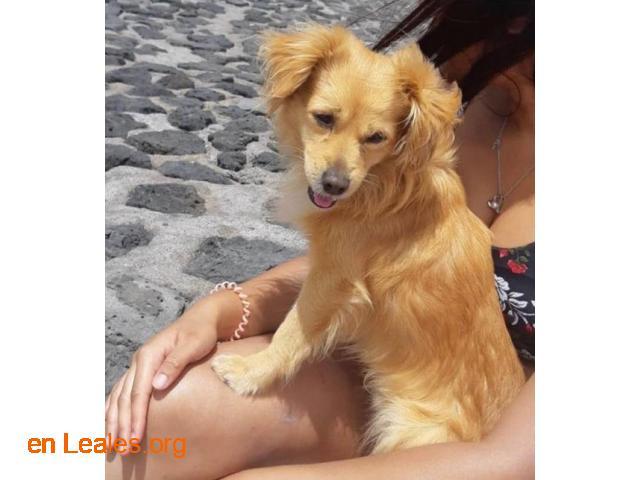 Perrito encontrado*** - 1