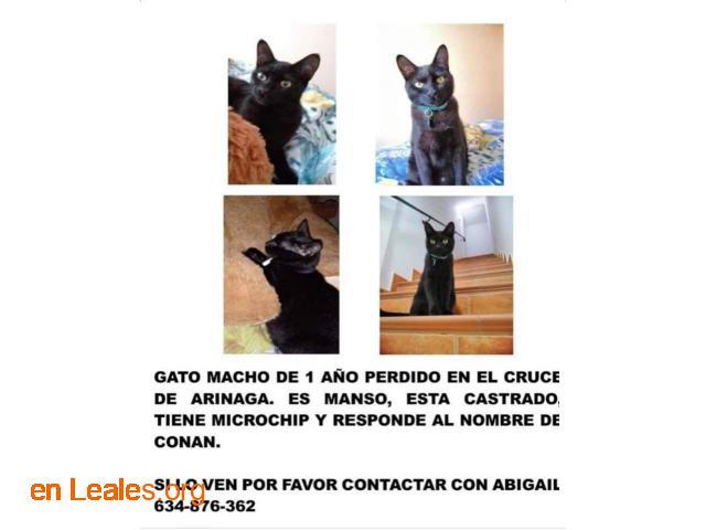 Gato Macho Perido - 6
