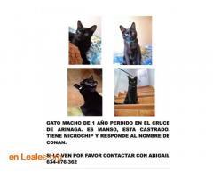 Gato Macho Perido - Imagen 6