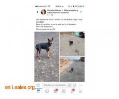 ENCONTRADO EN TINOCA.    LO CONOCES? - Imagen 4