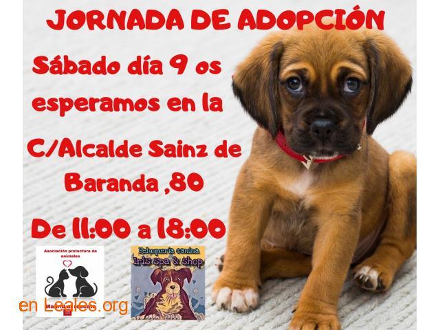 Jornada de adopción sabado 9 noviembre - 1