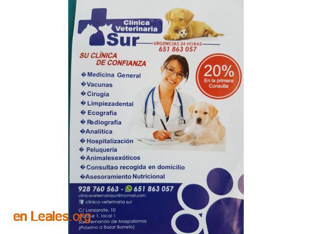 Clínica Veterinaria Sur - 1