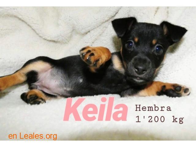 Keila ya adoptada - 1