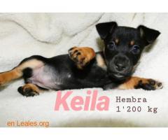 Keila ya adoptada - Imagen 1