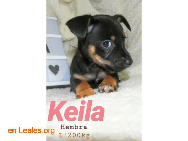 Keila ya adoptada - 2