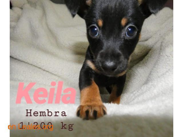 Keila ya adoptada - 3