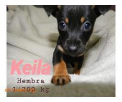 Keila ya adoptada - Imagen 3