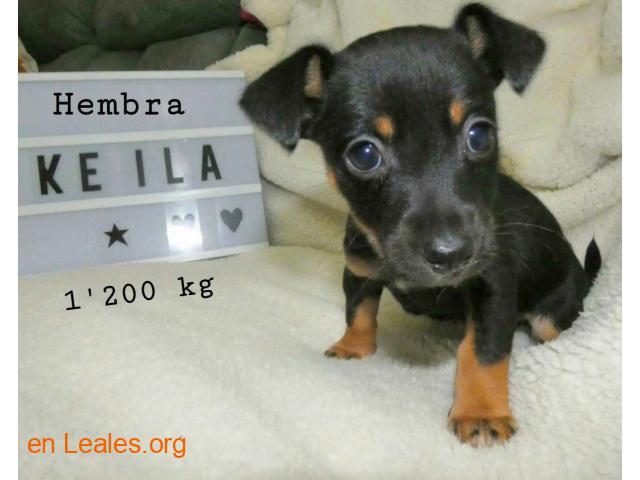 Keila ya adoptada - 4