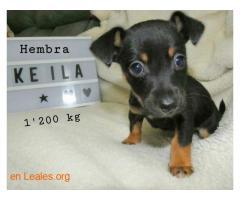 Keila ya adoptada - Imagen 4