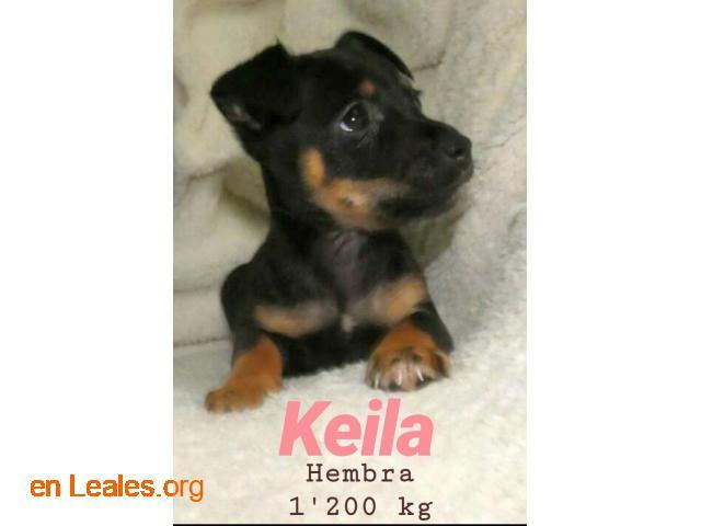 Keila ya adoptada - 5