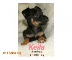 Keila ya adoptada - Imagen 5