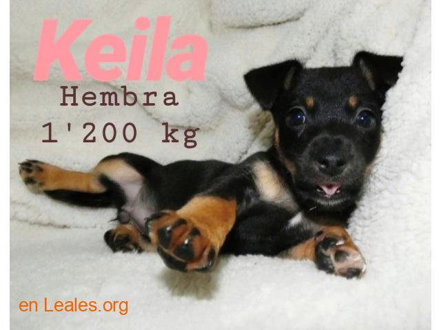 Keila ya adoptada - 6