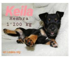 Keila ya adoptada - Imagen 6