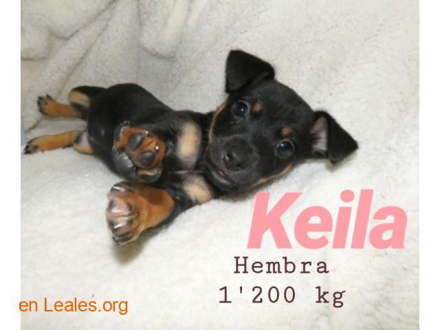Keila ya adoptada - 7