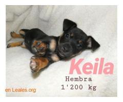 Keila ya adoptada - Imagen 7