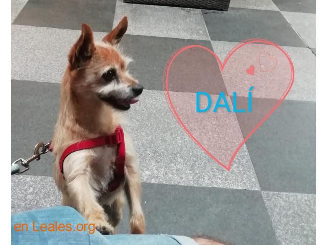 Dalí Ya adoptado - 1