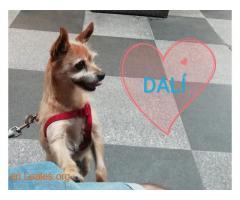 Dalí Ya adoptado - Imagen 1