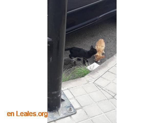 Gatitos pequeños Arucas - 2