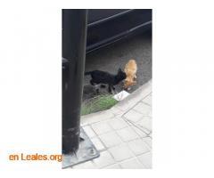 Gatitos pequeños Arucas - Imagen 2
