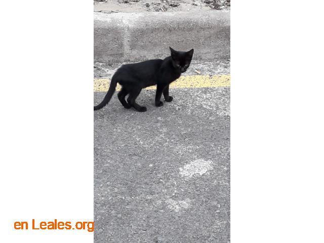 Gatitos pequeños Arucas - 3