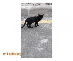 Gatitos pequeños Arucas - Imagen 3