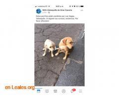 ENCONTRADOS EN VALSEQUILLO, LOS CONOCES? - Imagen 2