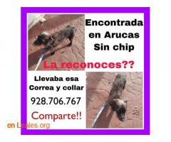 ENCONTRADA EN ARUCAS. LA CONOCES? - Imagen 3