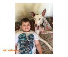 Cirilo en Adopción. - Imagen 4