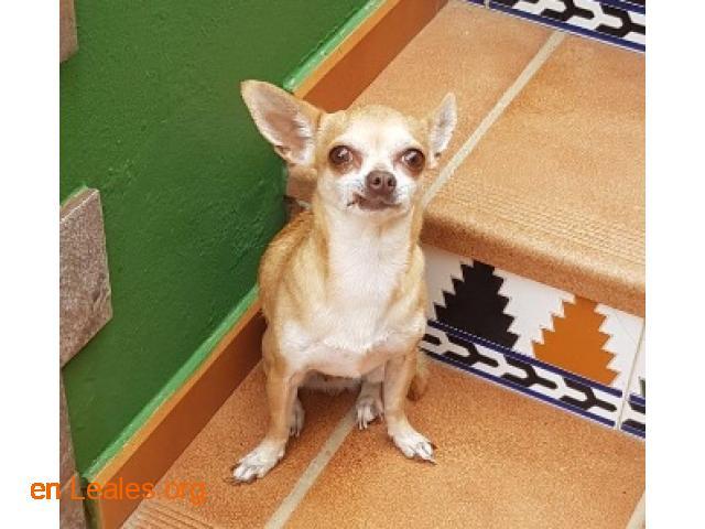 Busco la familia de esta perra - 4