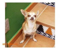 Busco la familia de esta perra - Imagen 4