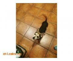 Perro encontrado - Imagen 3