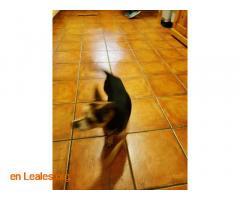 Perro encontrado - Imagen 4