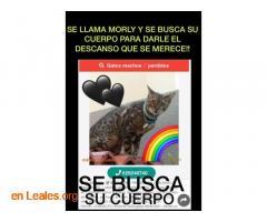 SE BUSCA EL CUERPO DE MORLY.  LAS PALMAS - Imagen 1