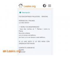 SE BUSCA EL CUERPO DE MORLY.  LAS PALMAS - Imagen 4